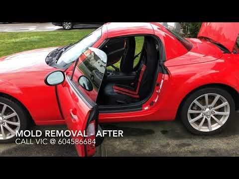 Mold Removal Hyundai Genesis