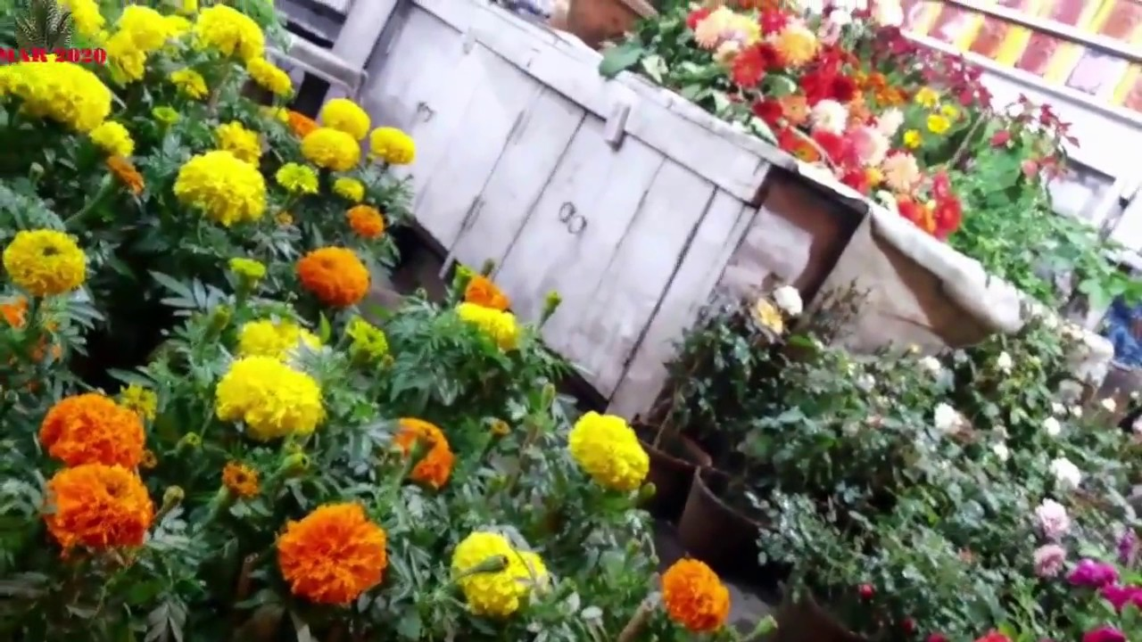 Colourfull Flower Nursery Next To Seadah Station Kolkata 2016