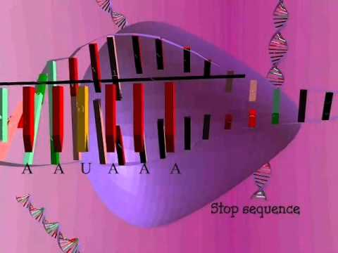 sysnthesis animation Protein synthesis - home - science netlinks.