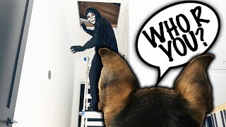 Dog Spies on Parents for a Week with Hidden GoPro Part 2! (24 Hour Undercover Challenge)