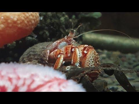 Marine Biology Residential Trip