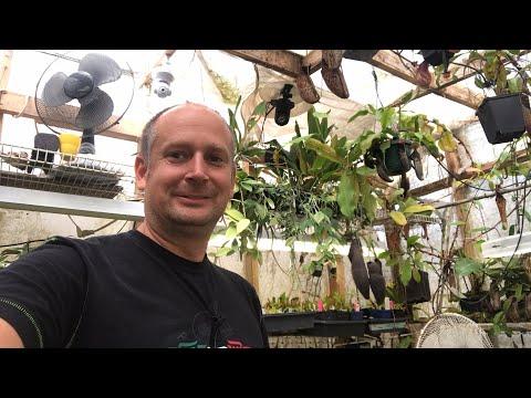 Live Carnivorous Plant  & Orchid Greenhouse Tour Apirl 2019 #1