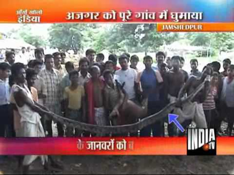 25 Feet Long Python Caught Near Jamshedpur
