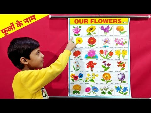 Learn Flowers Name In Hindi & English | फूलों के नाम | Name Of Flowers | Preschool