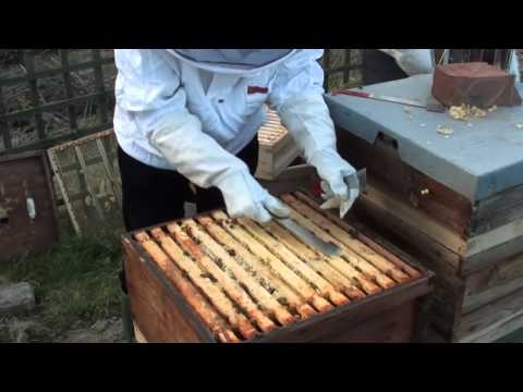 Merging together two bee hives