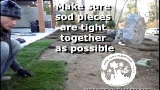 New York Plantings Landscape Contractors Sod Installation For Greener Grass New York 1