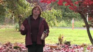 Garden Maintenance : How to Repel Raccoons