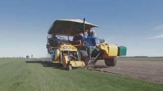 SagamaGreen видео-обзор с полей 2017 г.