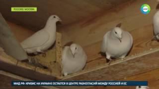 Борьба за птичьи права  москвич спасает старейшую голубятню от сноса
