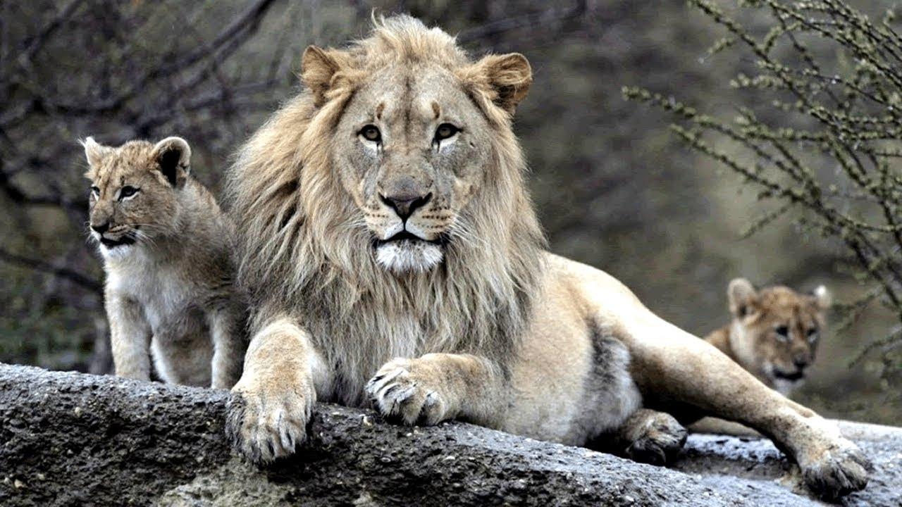 7 Animais Que Foram Levados Pelo Homem à Extinção E Você ...