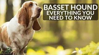 BASSET HOUND 101! Everything You Need To Know About Owning A Basset Hound Puppy
