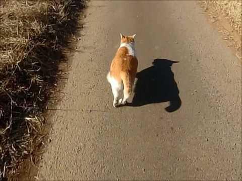 デブ猫 走る