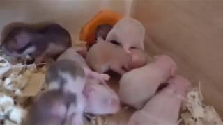 Дети Милки научились кушать