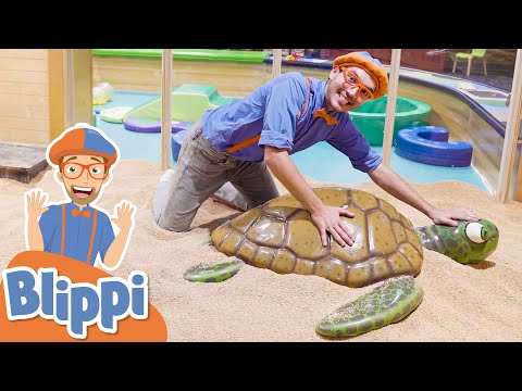 Blippi Visits A Children's Museum!   Learn Colors & Numbers   Educational Videos For Kids