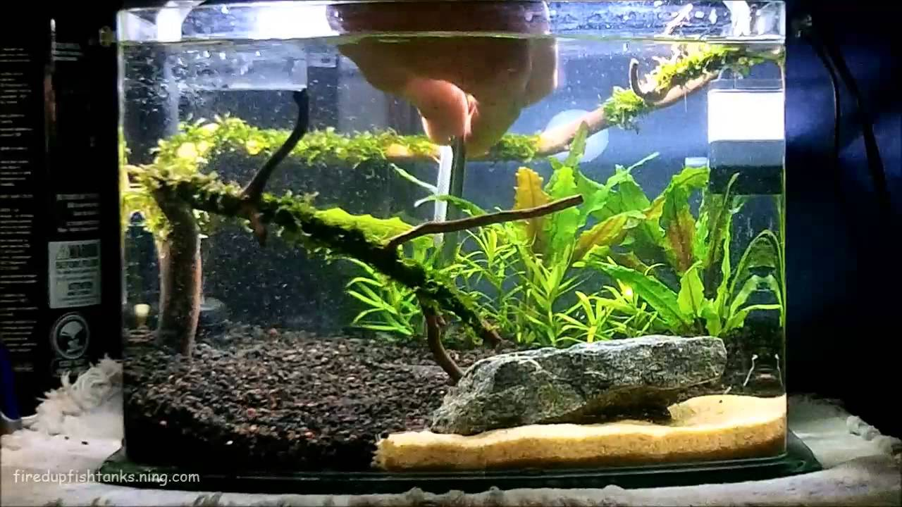 Good How To Aquascape   YouTube