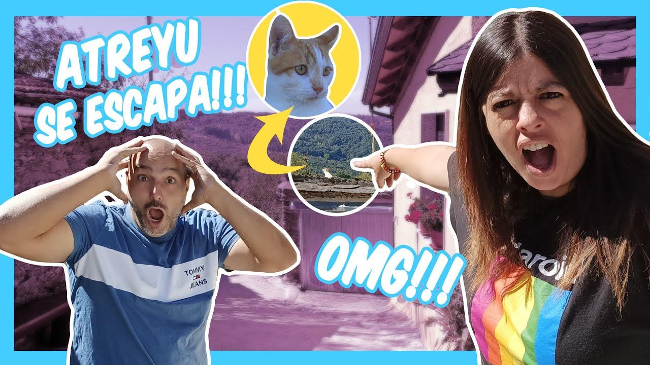 😻 Nuestra Mascota Gatito Atreyu se escapa y se va de casa 🏠   Momentos Divertidos