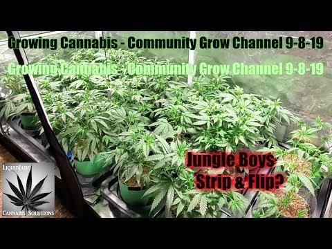 Growing Cannabis - Community Grow Channel 9-8-19