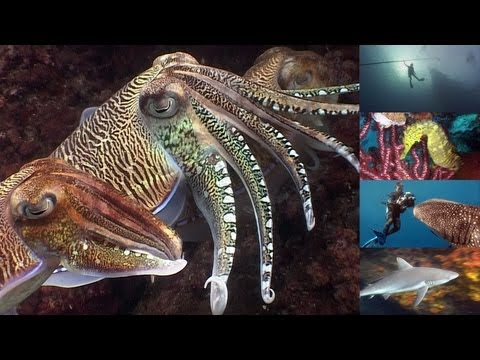 Reef Life of the Andaman  marine biology
