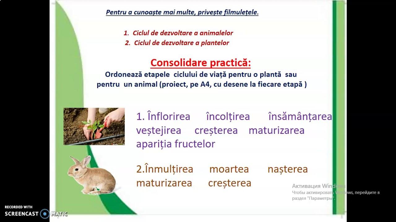 vierme worm eliminer toxine foie