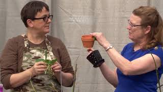 House Plant Rescue EP1 Poinsettias and Orchids