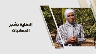 م. امل القيمري - العناية بشجر الحمضيات