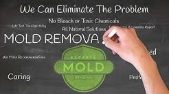 mold removal Charlotte NC - mold removal & remediation in Charlotte NC - reviews