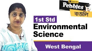1st Std Environmental science in Bengali | West Bengal | CH - 15 | 1st std Science |  Bengali Video