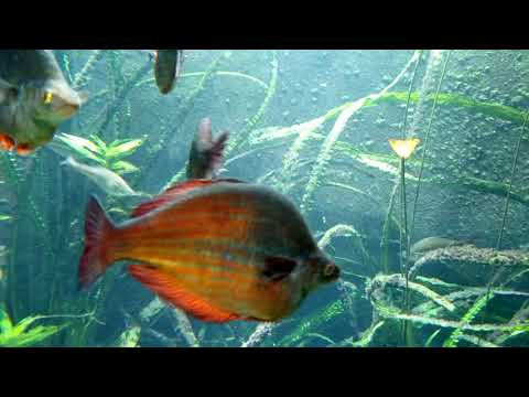 ZSL London Zoo | Aquarium (3)