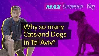 כאן אירוויזיון | למה יש כל כך הרבה כלבים וחתולים בתל אביב? (הולוג של מקס)