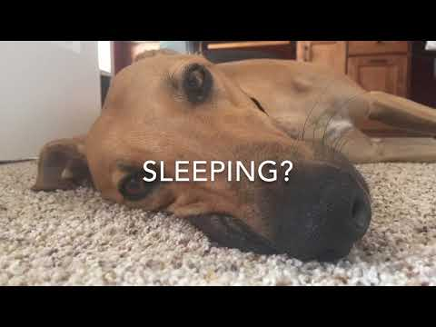 How To Care For A Greyhound
