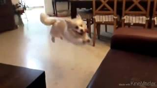 clumsy pets