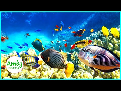🎧 Stunning Aquarium IV & The Best Relaxing Music -  SLEEP MUSIC - HD 1080P - Screensaver