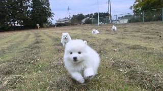 撮影日2012年11月13日 アライ畜犬牧場 http://www.araichikuken.com.