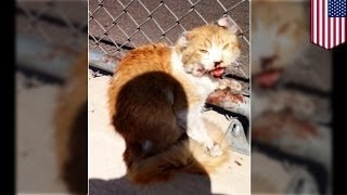 Ура! Добрый человек спас котика от верной гибели!