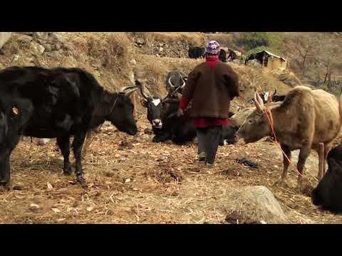 HIMALI Project in Rasuwa district, Nepal (Long Version Nepali)