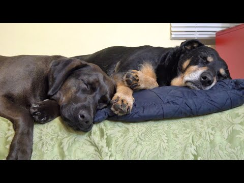 Rescue Dog Gets Best Friend Who Changes His Life