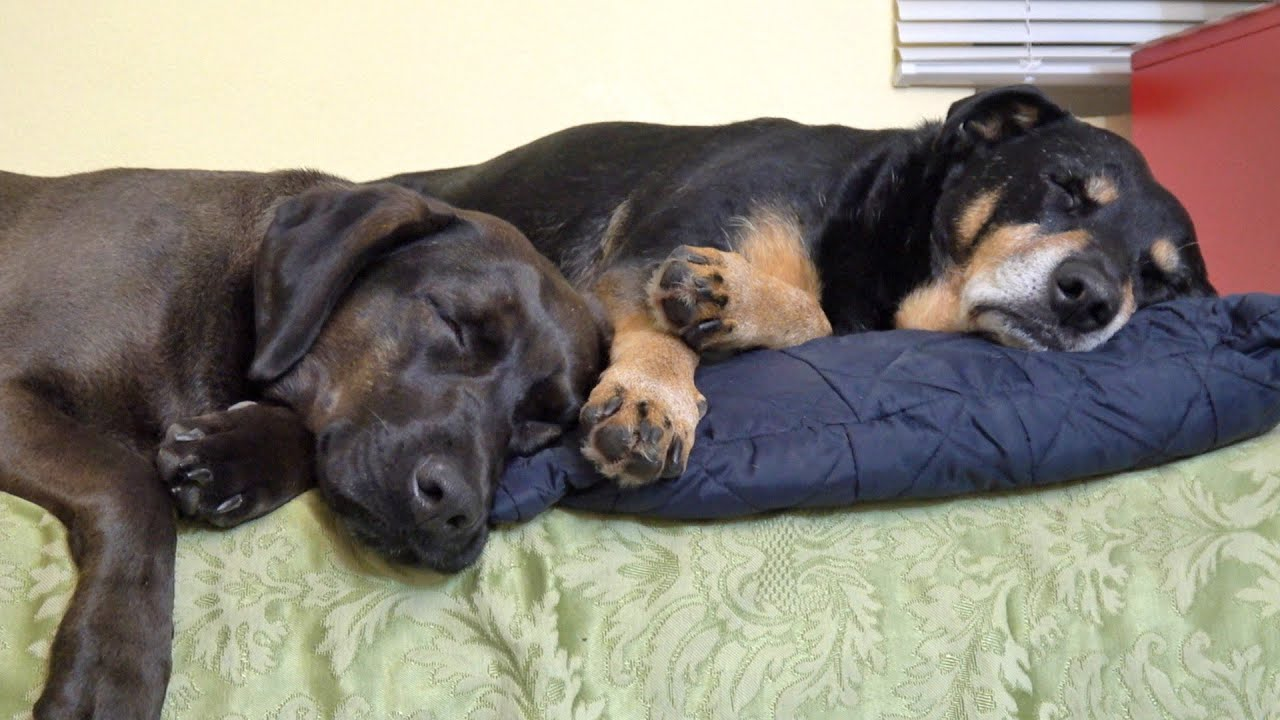 rescue-dog-gets-best-friend-who-changes-his-life