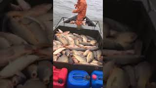 Рыбалка 2019 сазан