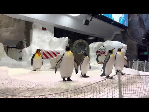 Penguin show at ski dubai