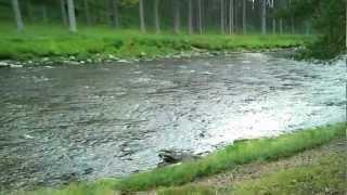 Camping - Braemar 2012