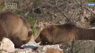 На Камчатке медведь убил рыбака   Новости сегодня   Происшествия   Масс Медиа