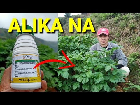 Insecticide For Sucking Chewing Pests | Syngenta Alika