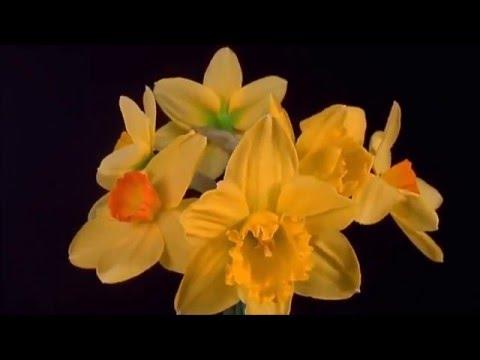 Женщины-цветы Альфонса Мухи