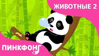 Панда — Ни Хао Панда | Песни про Животных | Пинкфонг Песни для Детей