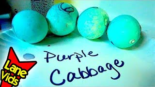 Why Does Purple Cabbage Turn Our Eggs Blue? - Dying Easter Eggs Naturally Science Experiment