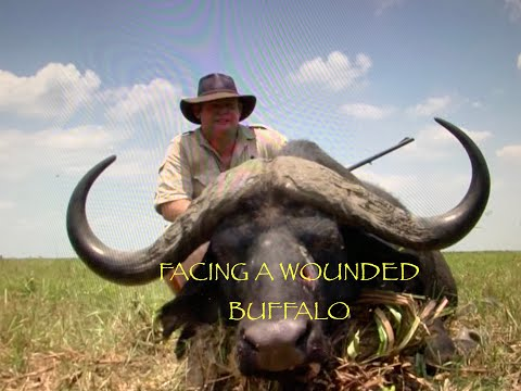 NEIL & DEBBIE'S FIRST WOUNDED BUFFALO TOGETHER