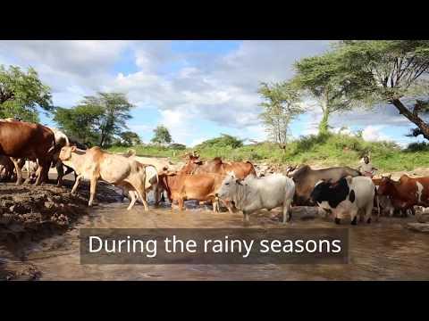 Sand Dam Transforms Lives in Lomuria Village, Karamoja Region, Uganda [2015]