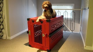 Impact Dog Crate Review