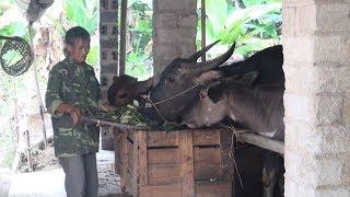 Tin Tức 24h :Người dân Yên Bái chủ động phòng, chống rét, dịch bệnh cho đàn gia súc
