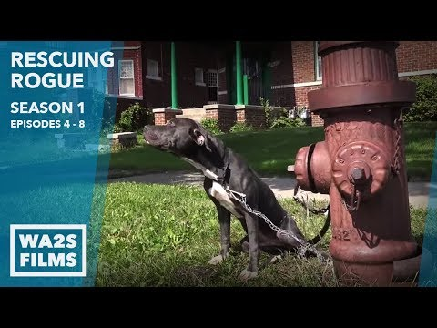 Chained Dog Cries & Puppies Saved: Rescuing Rogue Season 1 Episode 4 to 8 Hope For Dogs Like My DoDo